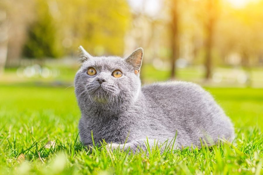 Common Lawn Products Toxic to Pets