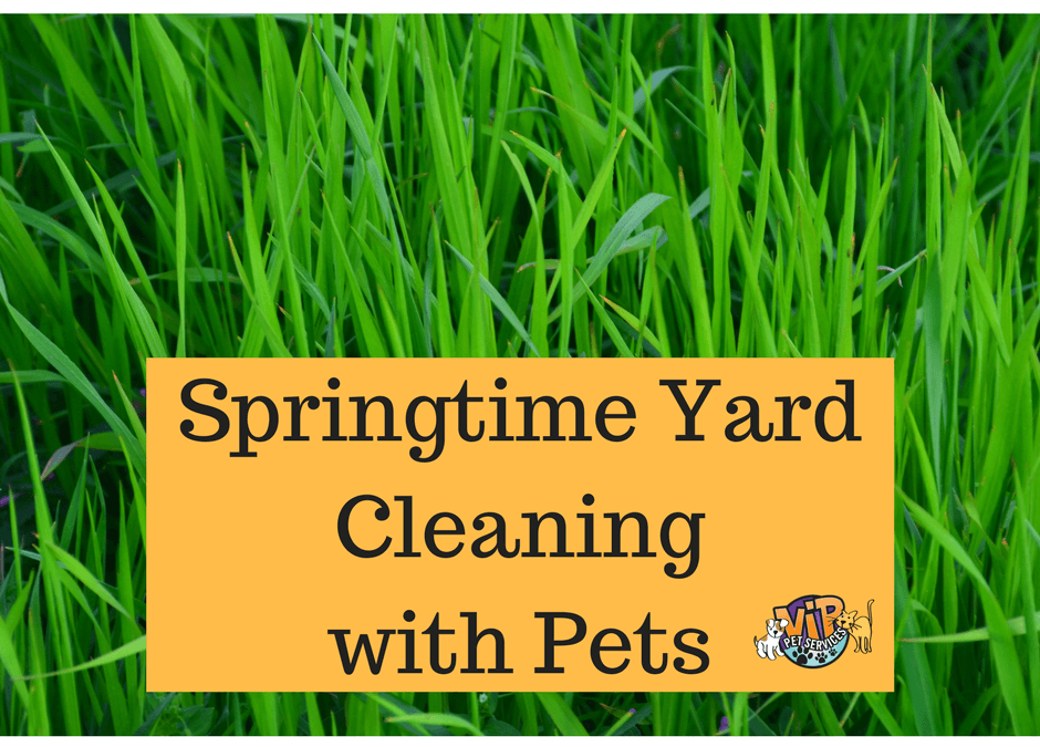 Springtime Yard Cleaning Is Important For Pets