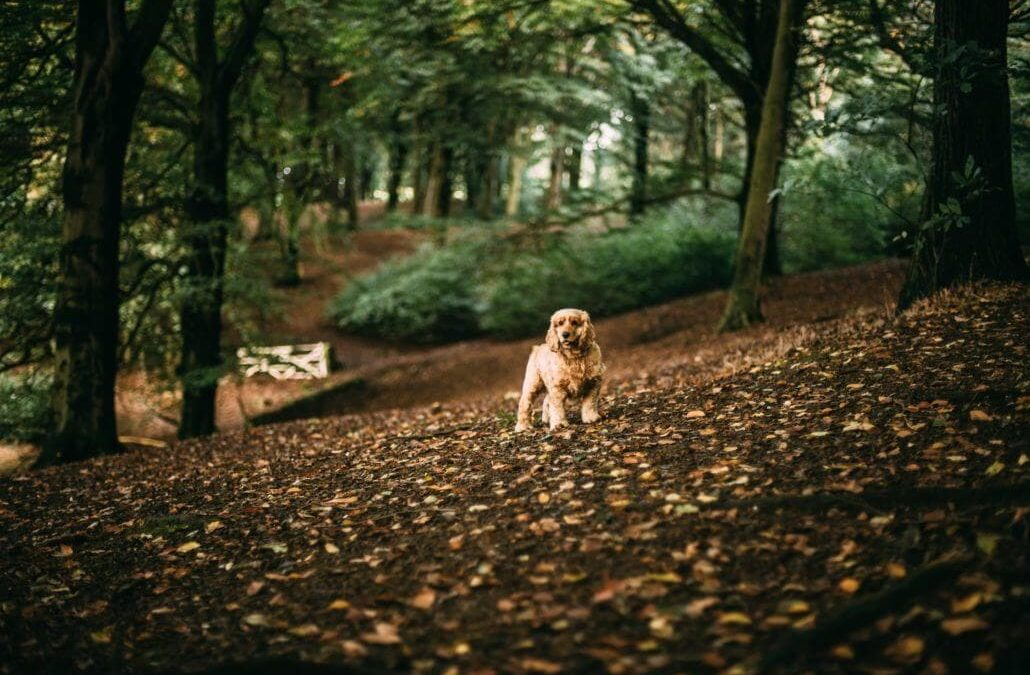 Fall Time Safety for your Pets