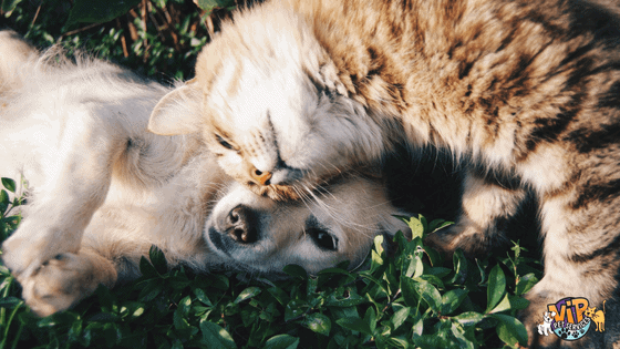 Dog and Cat rubbing their heads on each other in grass