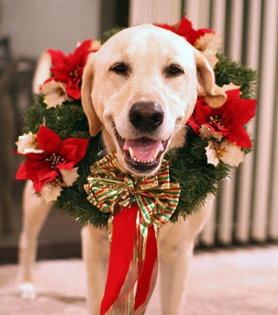 Fun Holiday Pet Toys and Gift Ideas