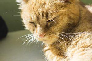 Orange cat with sunlight shining on it