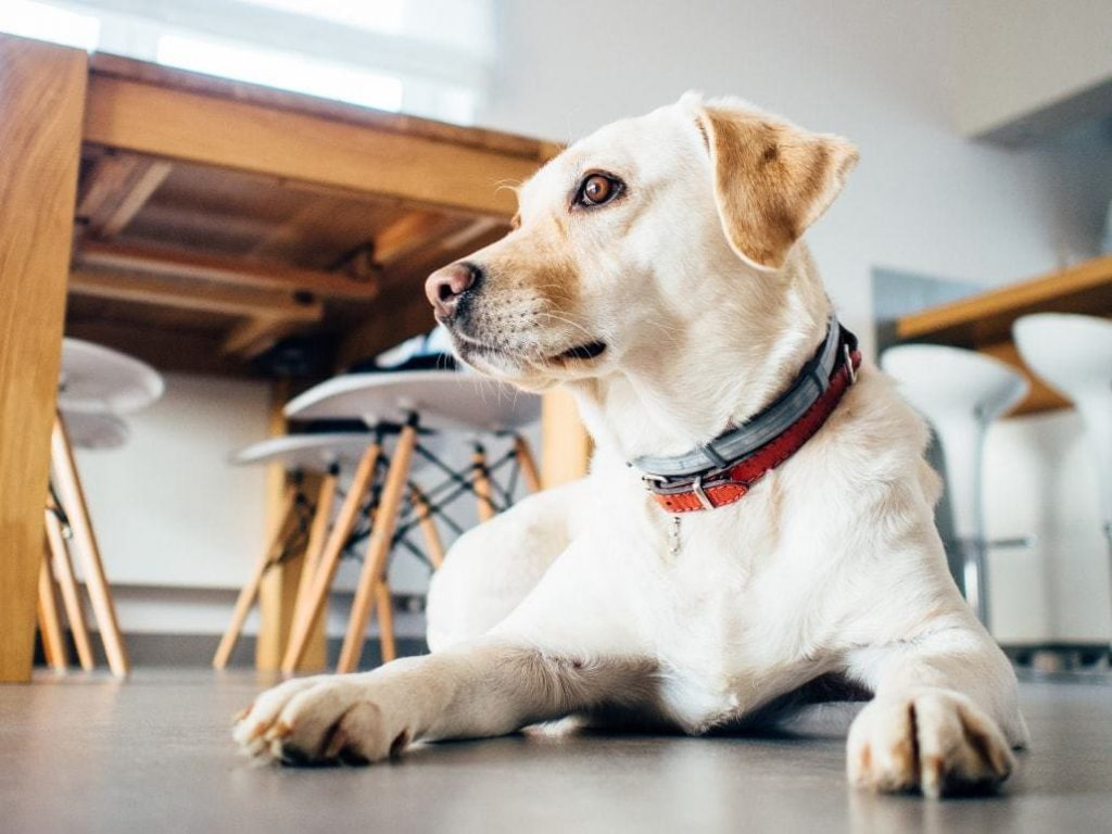 Are GPS Dog Collars Really Effective