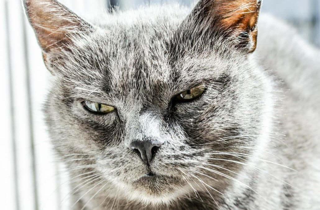 Is Your Cat Hissing? Here's What It Could Mean
