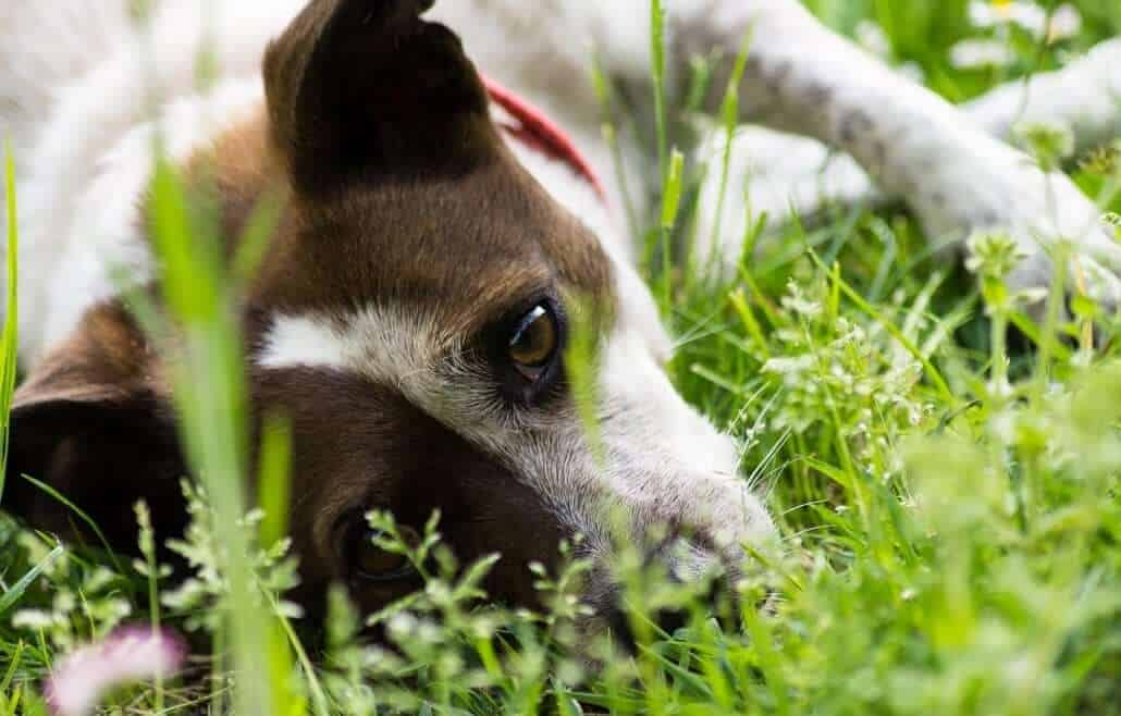 The Best Dog Friendly Plants