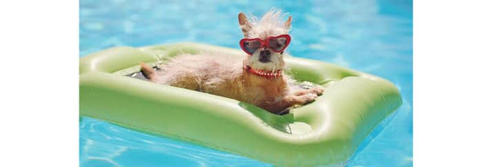 Preventing Sunburn for Your Pets