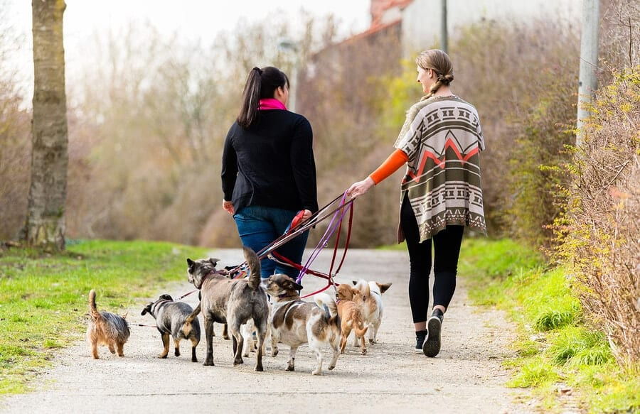 Top Places to Walk Your Dog in Plano