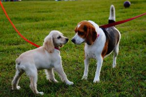 Local Pet Sitting & Dog Walkers Farmers Branch, TX