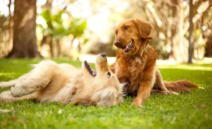 The Benefits of Diatomaceous Earth for Dogs: Natural Flea Treatment and More!
