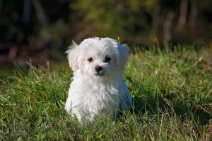 Expert Pet Sitting And Dog Walking Service In Plano, TX