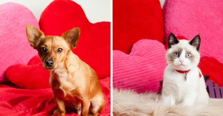 Fun Valentine's Day Treats for Your Pets