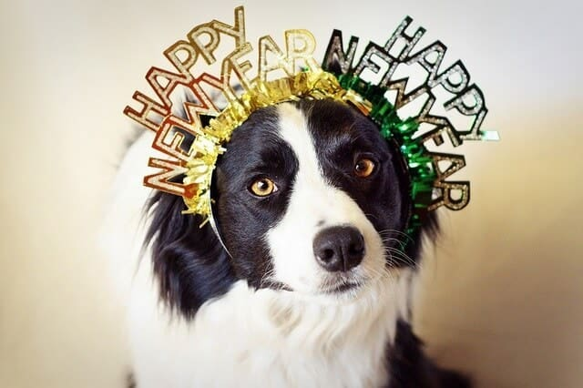 A Party your New Year's Eve Party Dog Will Love