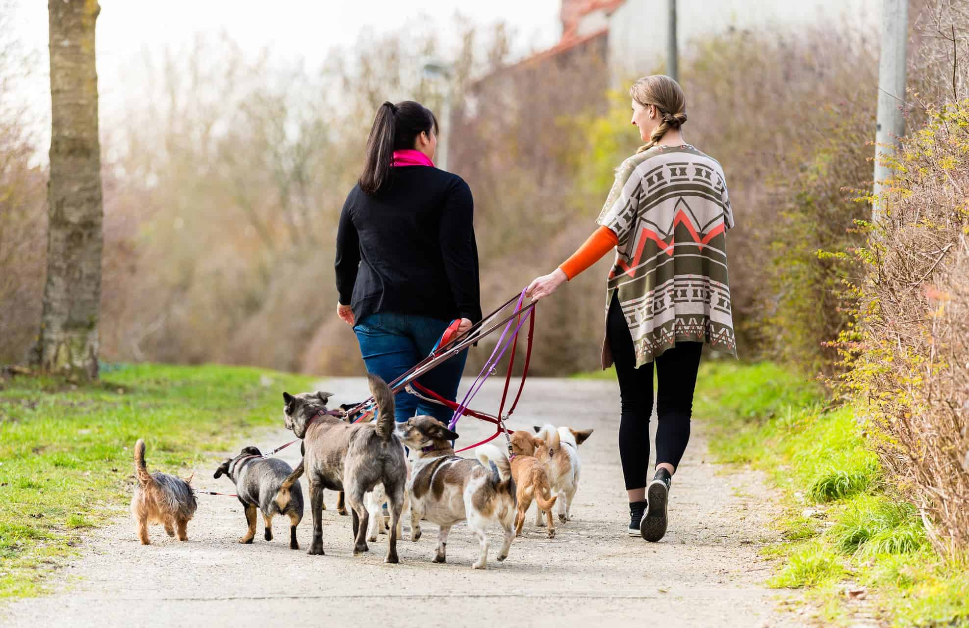 1 Pet Sitters Dog Walkers Lewisville Tx Vip Pet Services