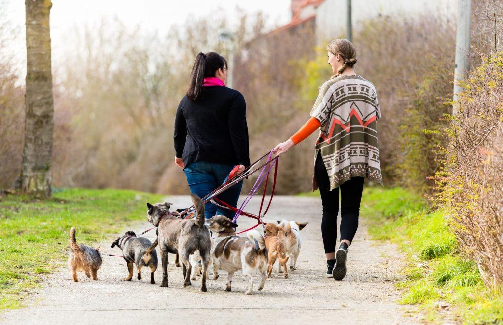 Expert Dog Walking Tips for the Winter