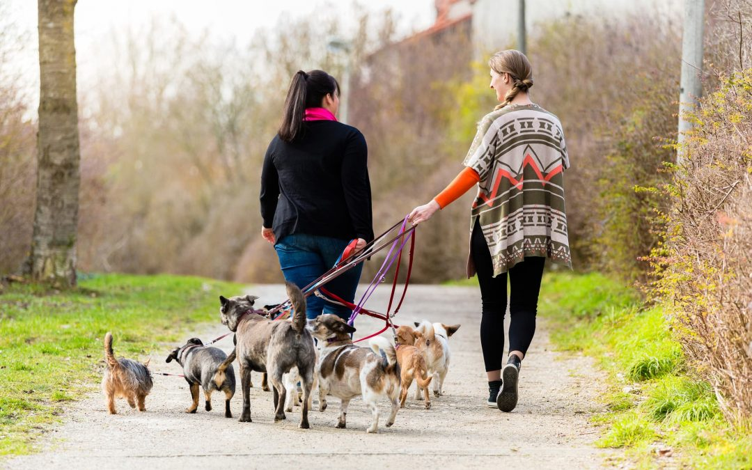 Expert Dog Walking Tips for the Winter