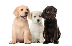 pet sitters dog walkers mckinney