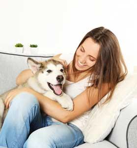 The Best Pet Sitting Services Dallas Austin Vip Pet Services