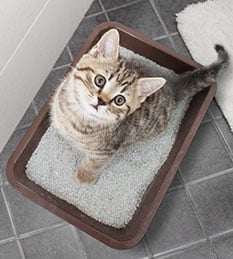 Litter Box Services