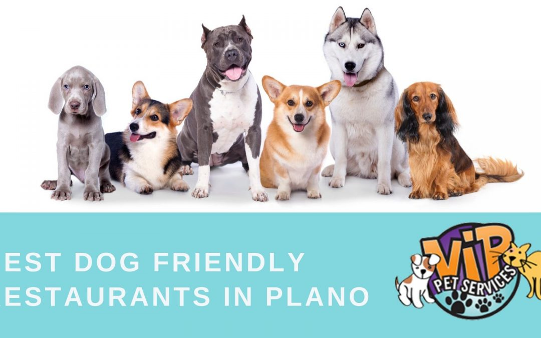 The Best Dog Friendly Restaurants in Plano