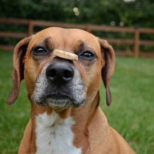 VIP Pets Trick Training
