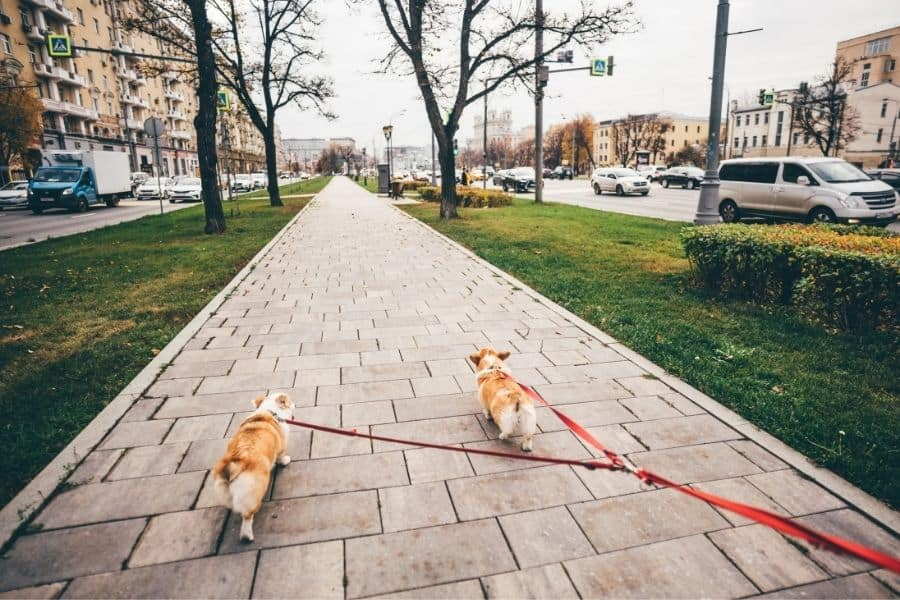 4 Ways our Dog Walking Service helps Remote Workers
