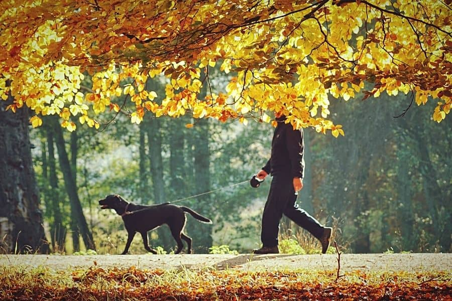 5 Best Places for Dog Walking in Plano