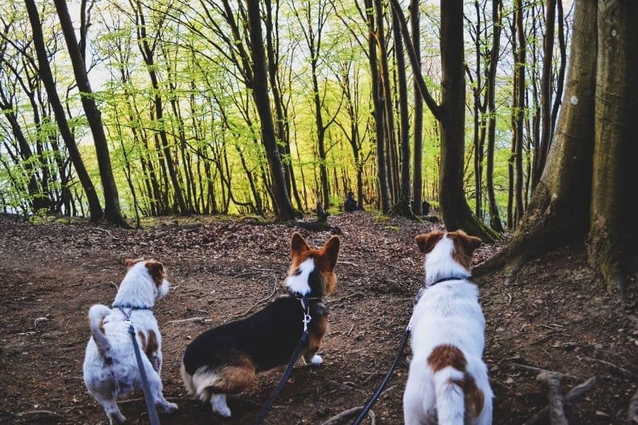 Best Places for Dog Walking in Plano