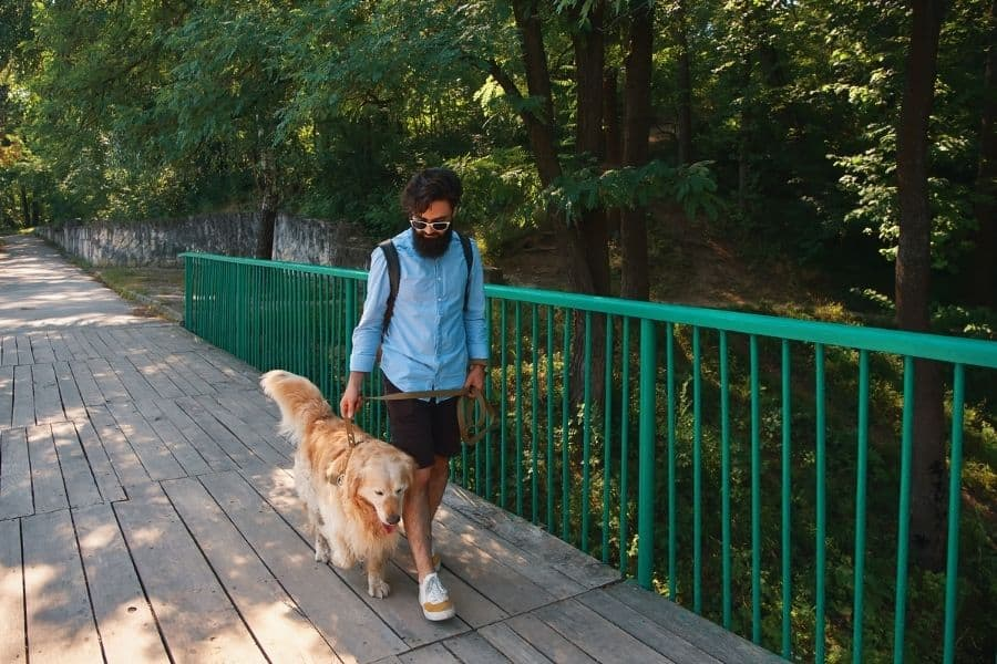 Ways our Dog Walking Service helps Remote Workers