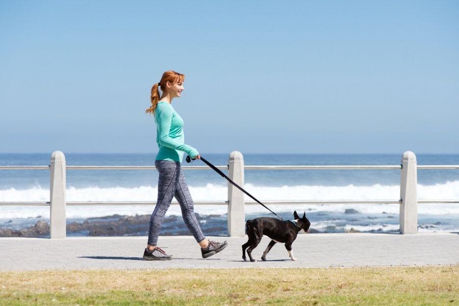 You Should Hire a Frisco Dog Walker