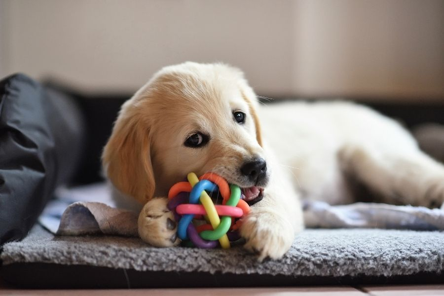 Fun things to do with your pet at home