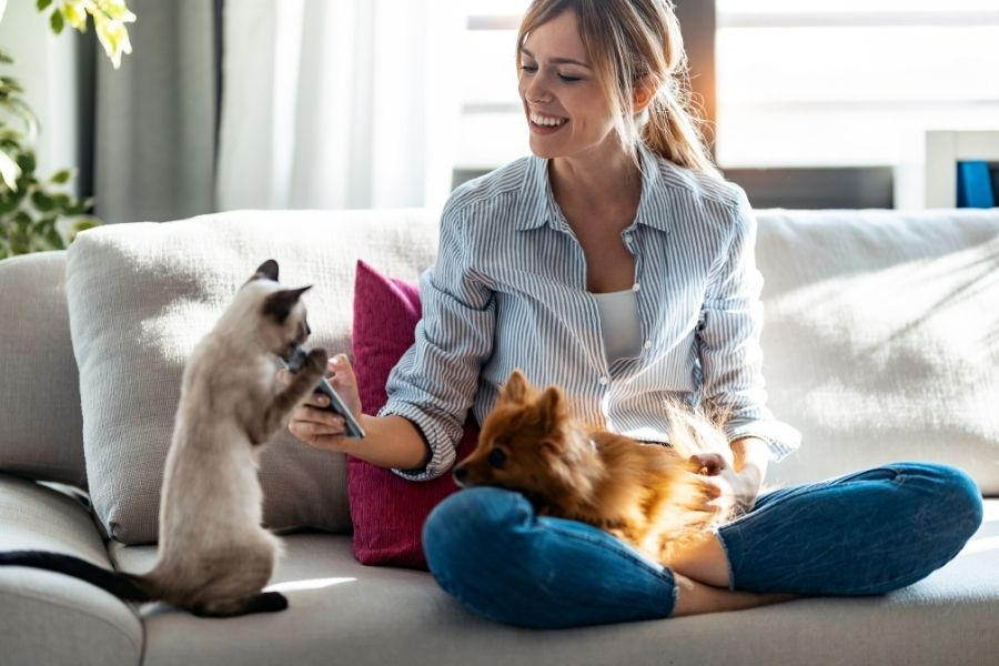 things to do with your pet at home