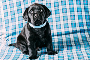 Puppy Dog Jog