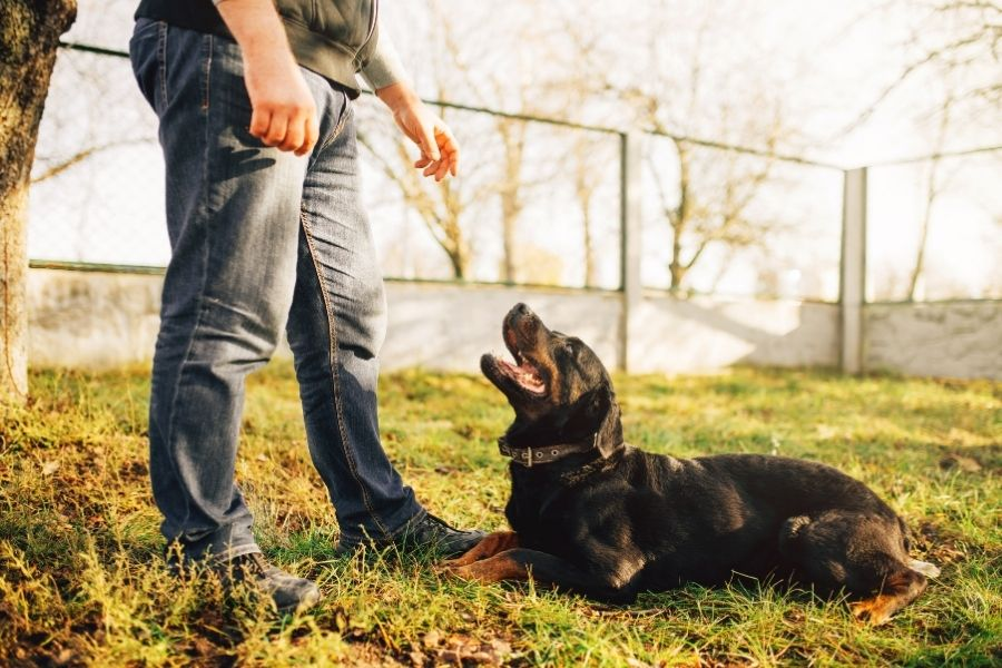 Dog Training Programs in Dallas and Austin