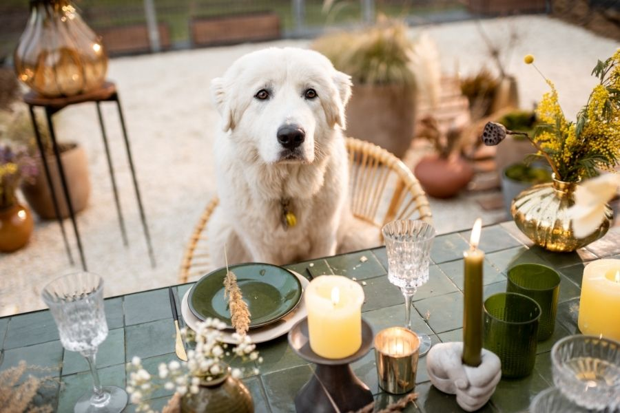 5 Dog Friendly Restaurants in Austin