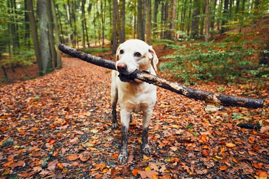 Can you Over-Exercise your Dog?
